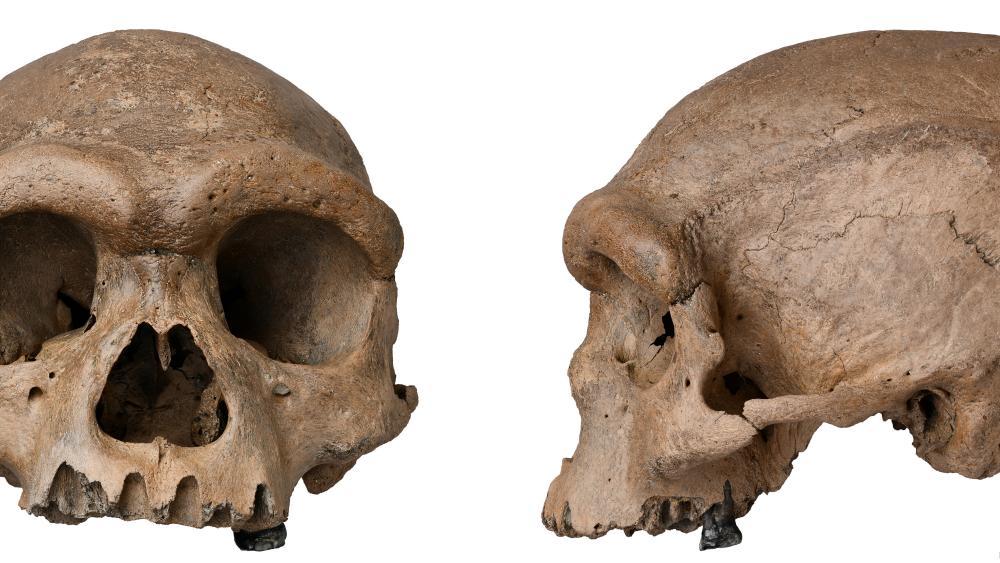 The Guardian: Огромный человеческий череп из  китайского колодца заставляет ученых переосмыслить эволюцию