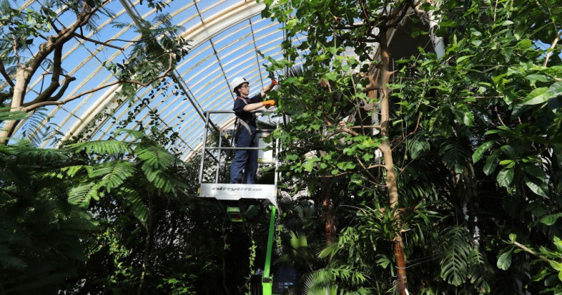 Лондонский Кью Гарденс расскажет посетителям о том, насколько расистскими являются его растения