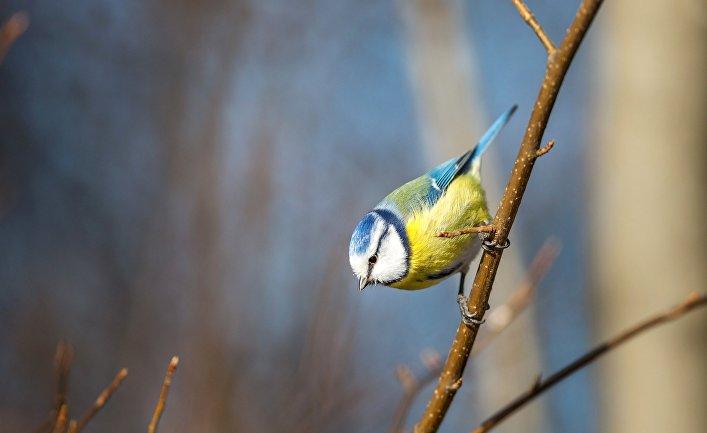В Германии от пневмонии массово гибнут птицы, пока неясно, передается ли  болезнь людям