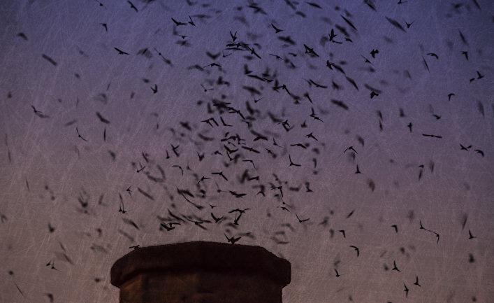 Таинственная жизнь птиц, которые всегда в полете