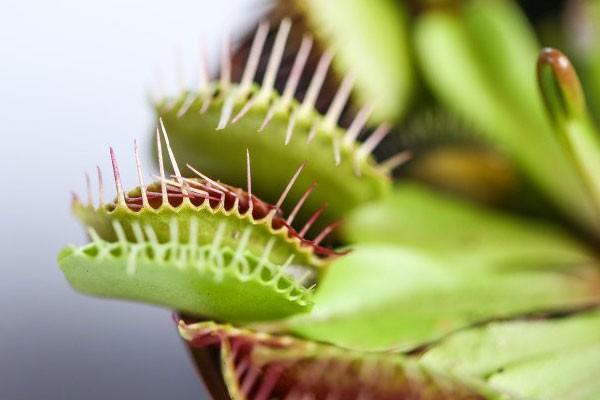 Растения способны разумно мыслить