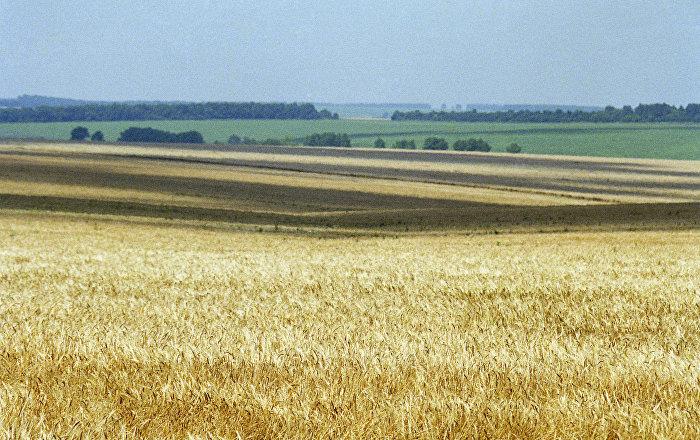 Молдова-пшеница