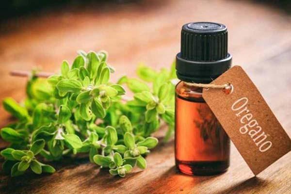 Уникальное лечебное средство в борьбе с инфекциями - масло орегано
