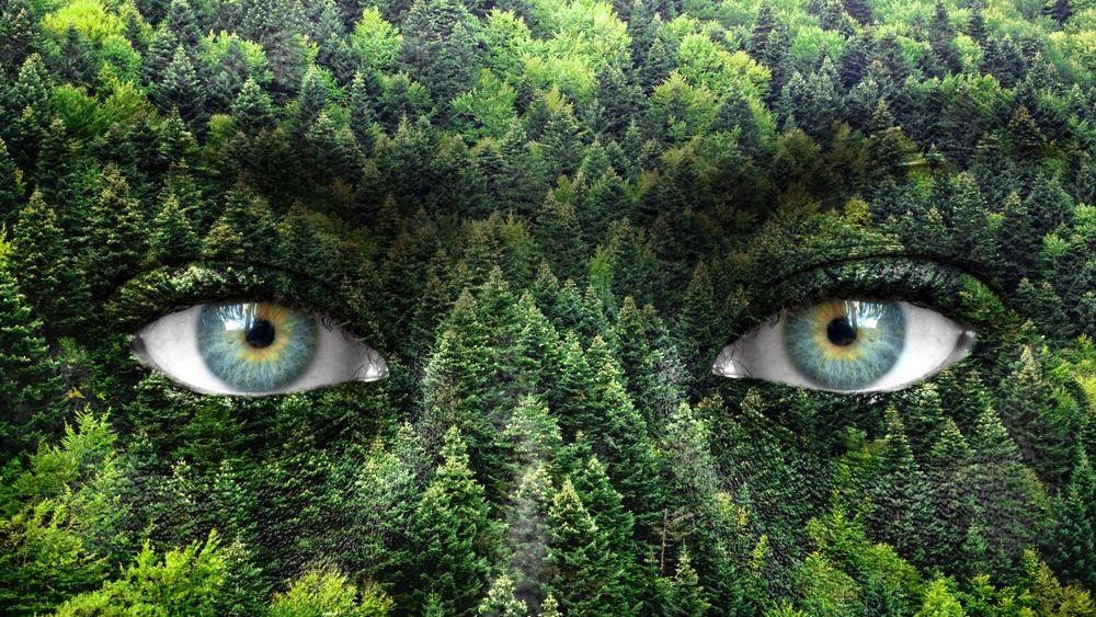 Деревья передают свой жизненный опыт по наследству