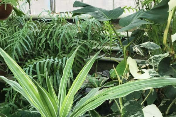 Биологи придумали прибор для общения с растениями