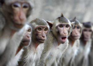 Банда обезьян в Индии напала на лаборантку и захватила образцы крови с Ковид-19