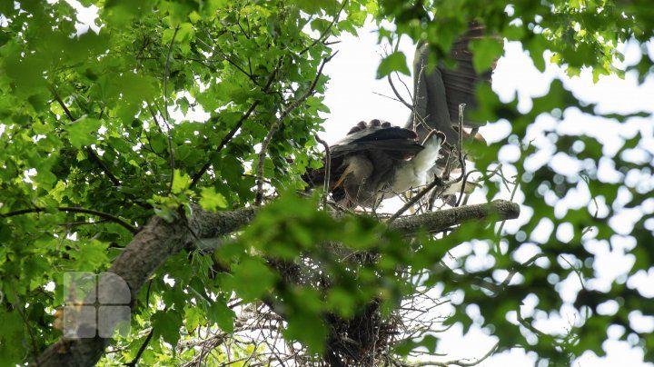 В молдавском лесу существует страна цапель
