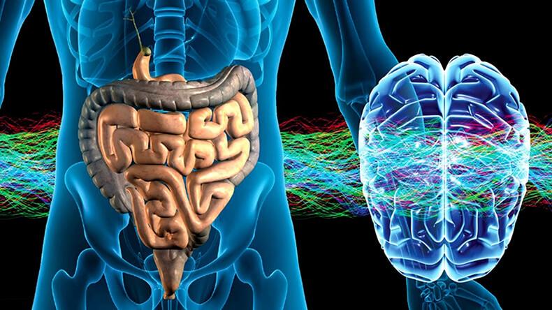 У человека есть второй мозг и, возможно, он главный