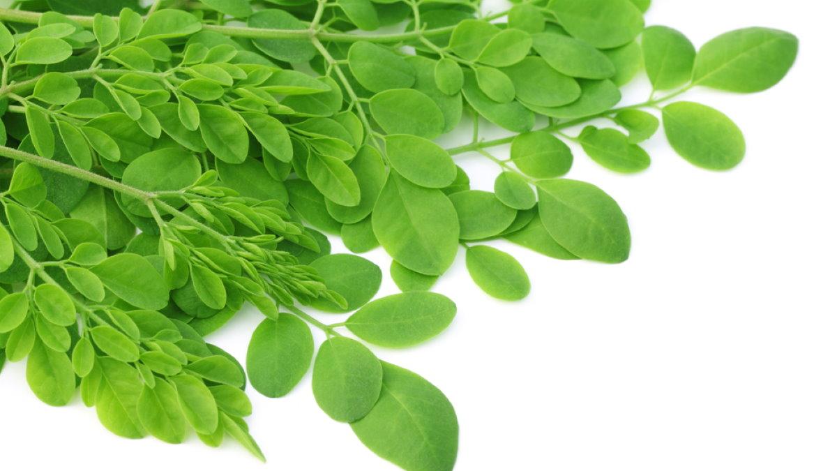 «Вечное» растение, быстро очищающее кровь от лишнего сахара и холестерина