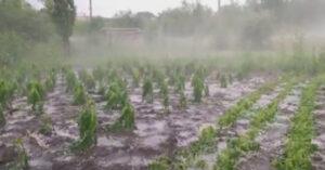 Град убирали лопатой для снега: непогода нанесла огромный ущерб молдавским аграриям