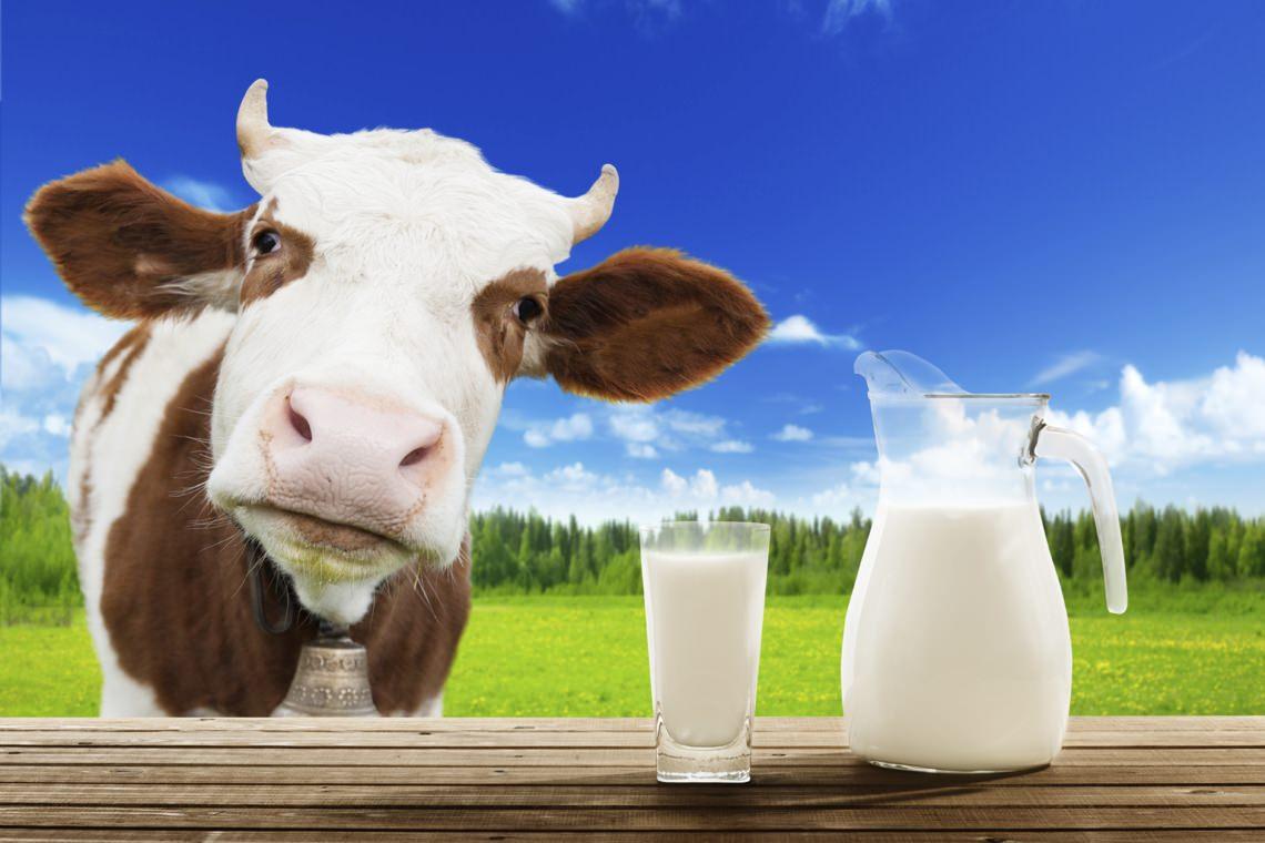 Ученые  теперь признают, что употребление коровьего молока дает иммунитет к COVID