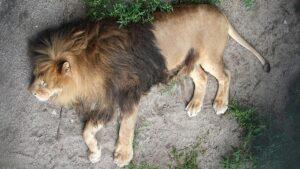 В зоопарке Праги коронавирусом заразились звери