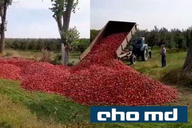 Молдавские фермеры вынуждены выбрасывать тонны урожая